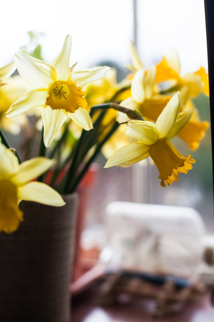 Close up of Daffodils, Wedding photography Lake District
