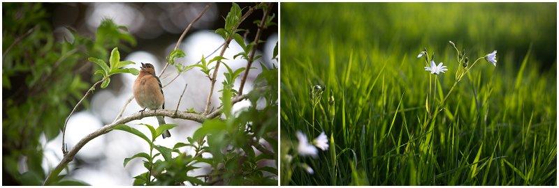 Beautiful nature Lake District Wedding photographer