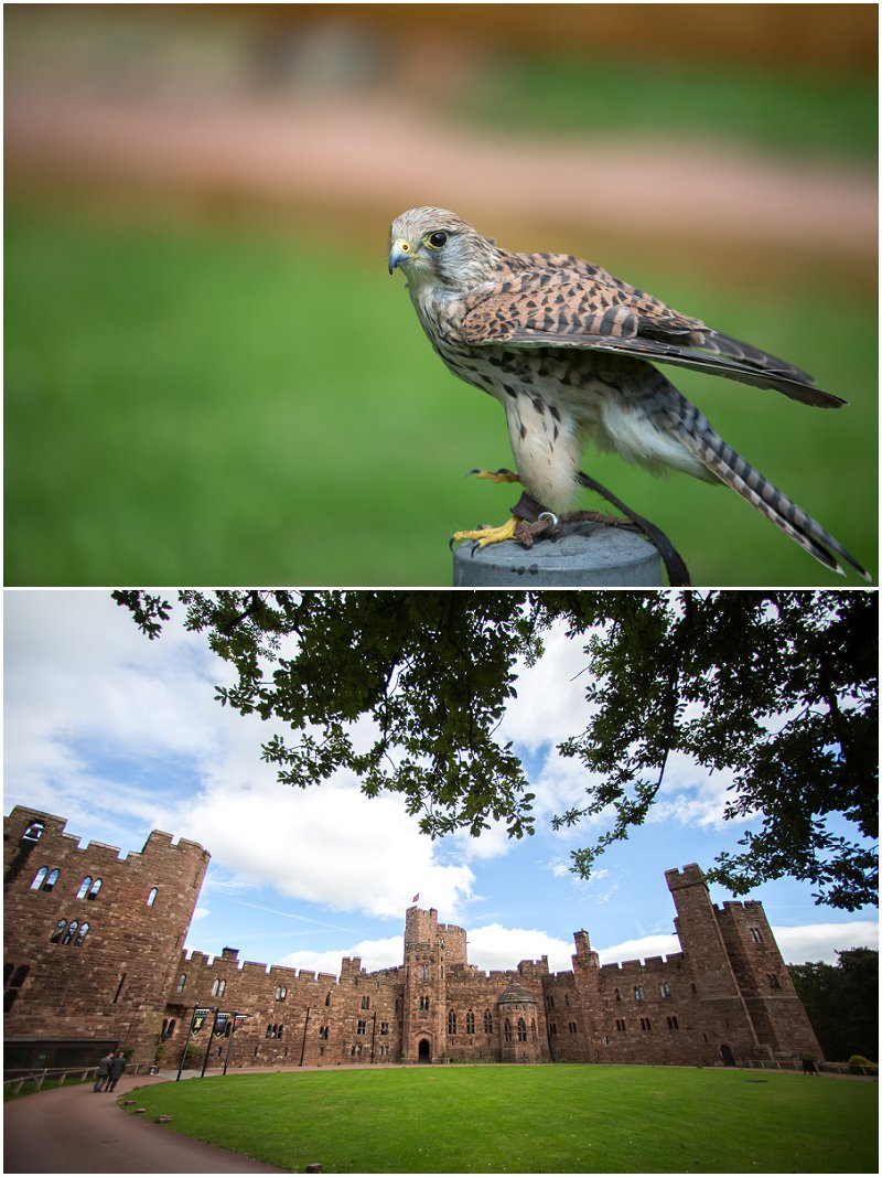 Bird of Prey at Peckforton Castle | Award Winning Wedding Photographer Karli Harrison Photography