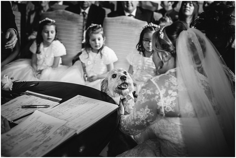 Karli Harrison Photography | Dog during Ceremony at The Inn on the Lake