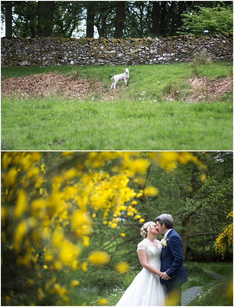 A little lamb and bride and groom at Linthwaite House Hotel Wedding