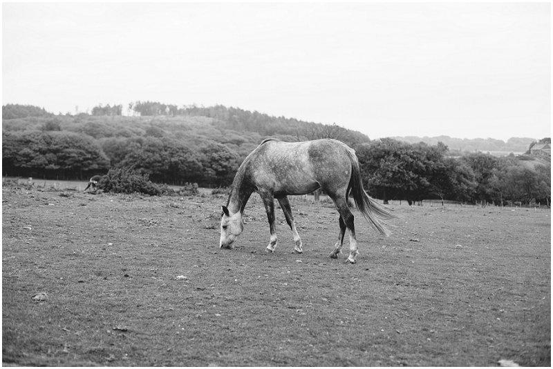 Beautiful horse at Rivington Park photo shoot